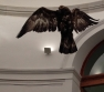 Prado Museum - Miguel Angel Blanco - Eagle - November 2013 - Alli Burness - detail