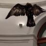 Prado Museum - Miguel Angel Blanco - Eagle - November 2013 - Alli Burness - detail